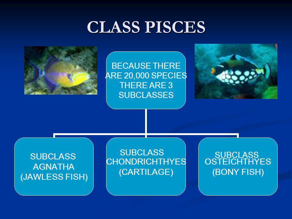 CLASS PISCES SUBCLASS SUBCLASS