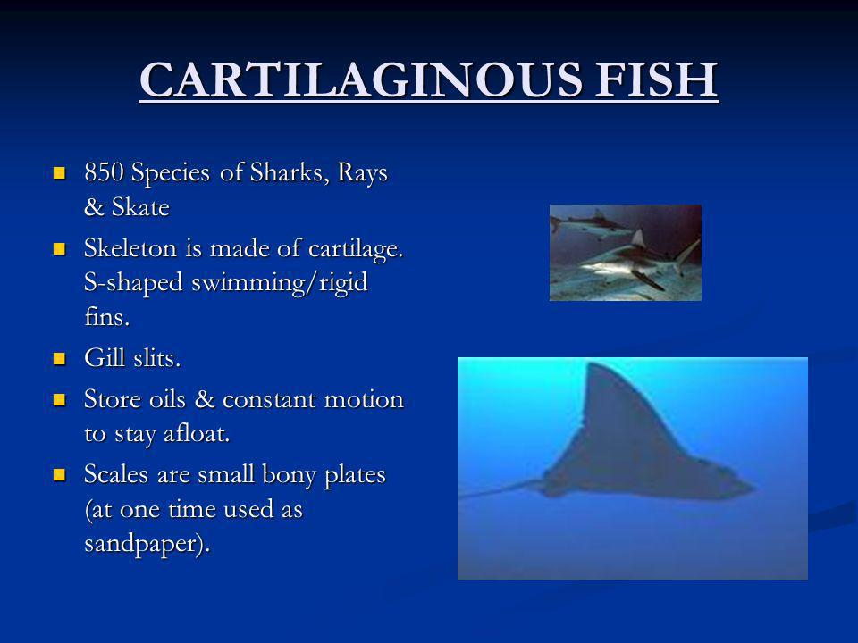 CARTILAGINOUS FISH 850 Species of Sharks, Rays & Skate