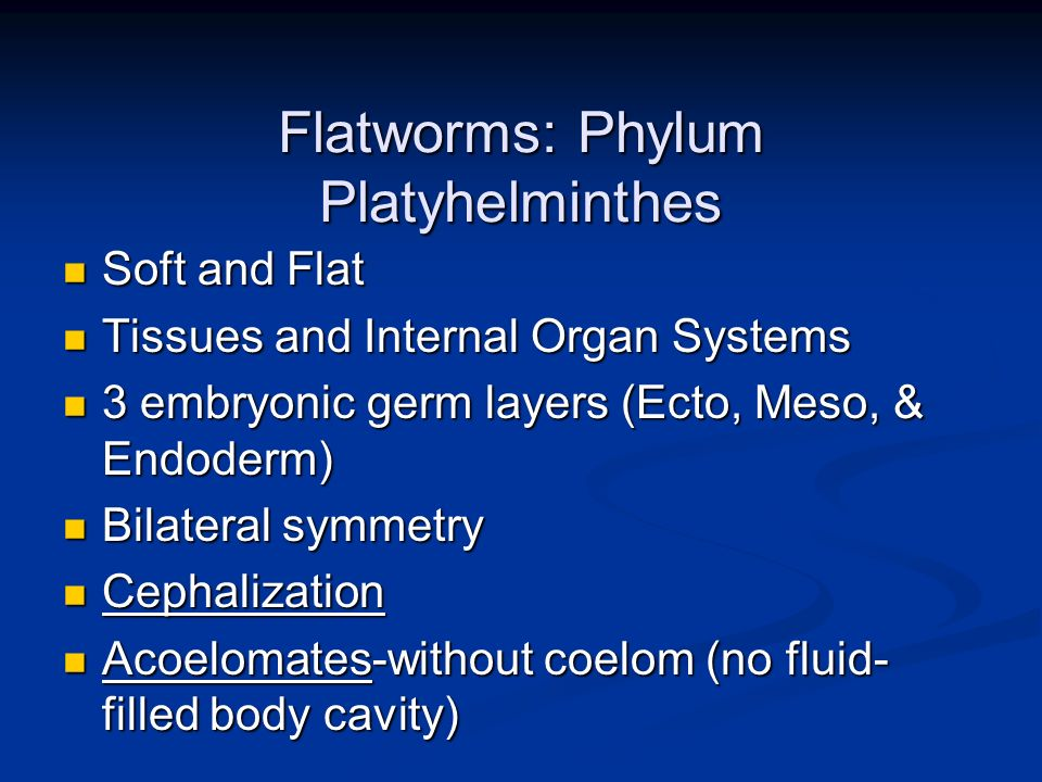 Flatworms: Phylum Platyhelminthes