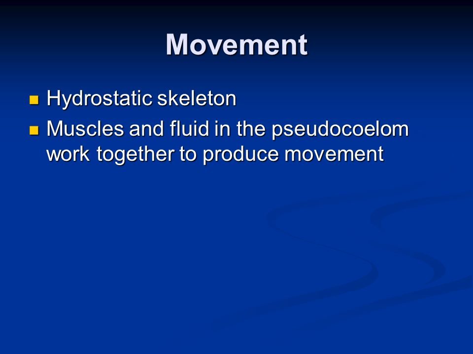 Movement Hydrostatic skeleton