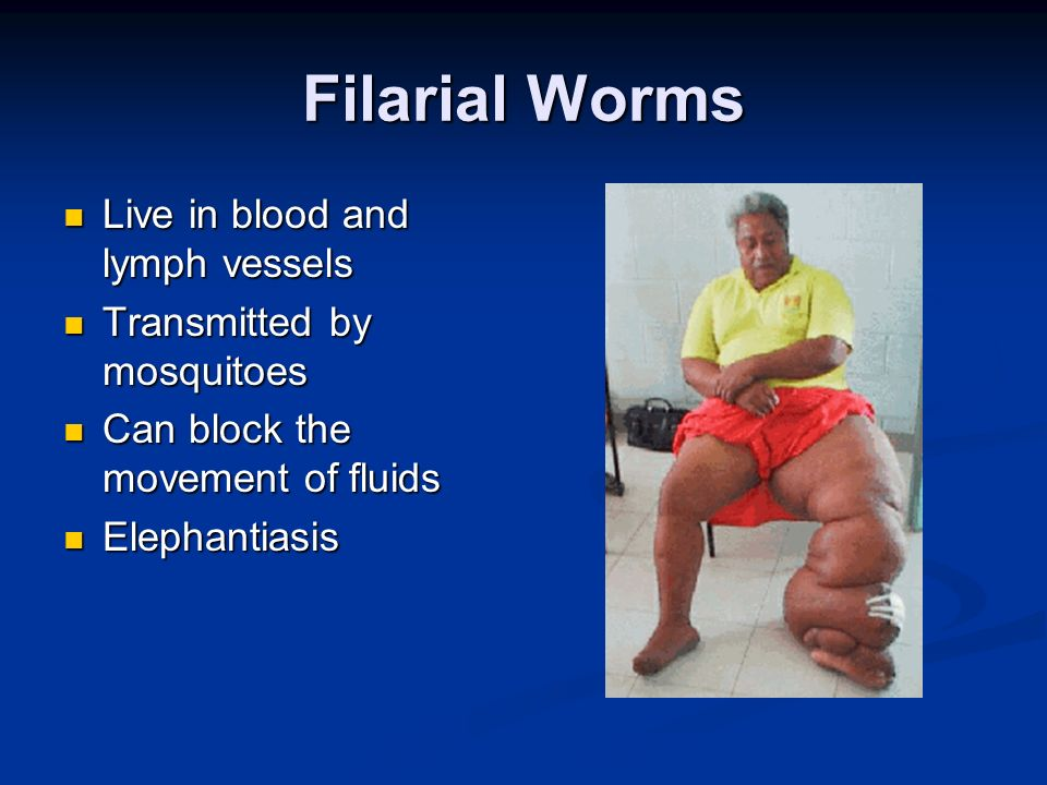 Filarial Worms Live in blood and lymph vessels