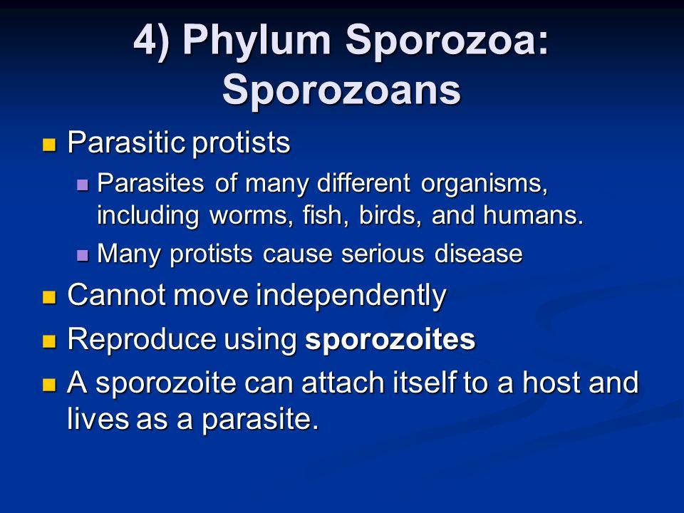 4) Phylum Sporozoa: Sporozoans