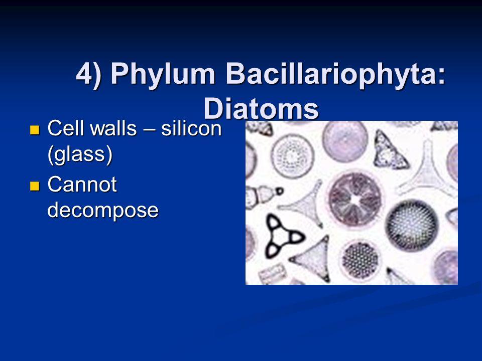 4) Phylum Bacillariophyta: Diatoms