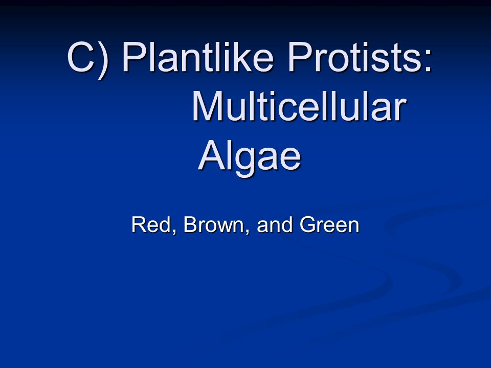 C) Plantlike Protists: Multicellular Algae
