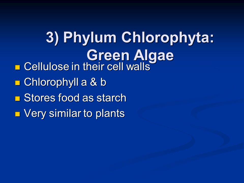 3) Phylum Chlorophyta: Green Algae
