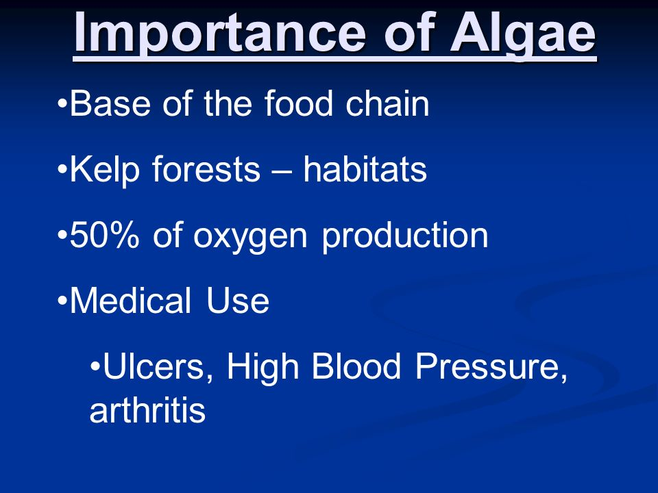 Importance of Algae Base of the food chain Kelp forests – habitats