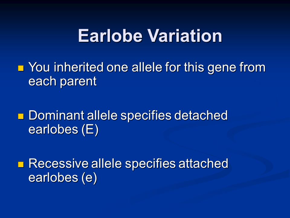 Earlobe Variation You inherited one allele for this gene from each parent. Dominant allele specifies detached earlobes (E)