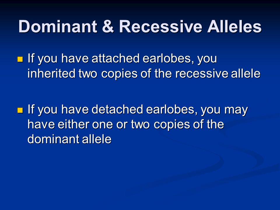 Dominant & Recessive Alleles