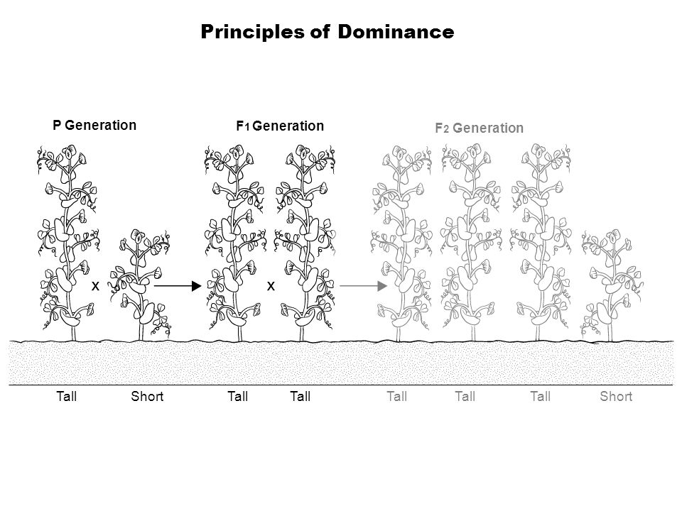Principles of Dominance