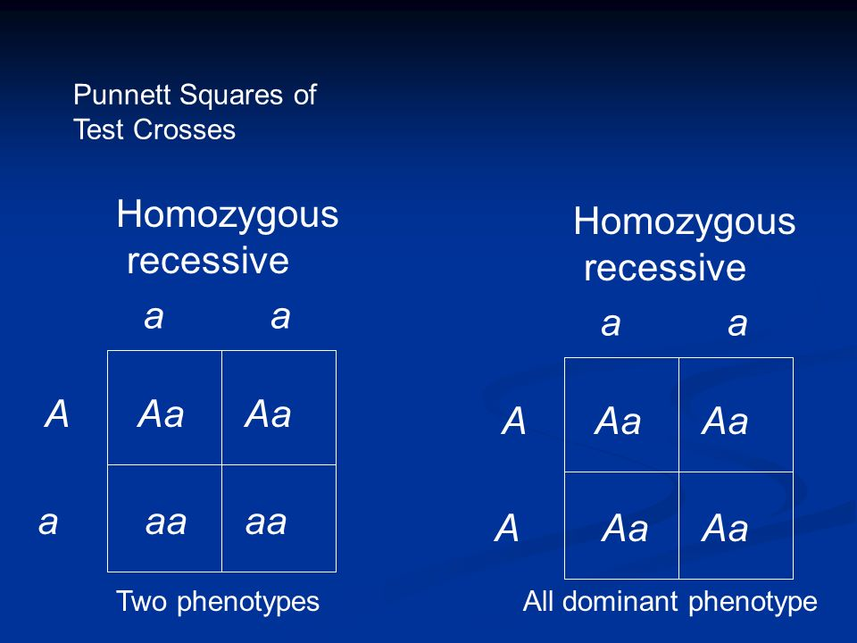 Homozygous recessive a a A a aa Aa Homozygous recessive a a A Aa