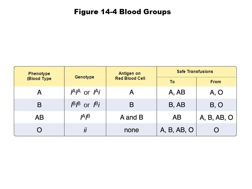 Figure 14-4 Blood Groups Safe Transfusions Phenotype Antigen on