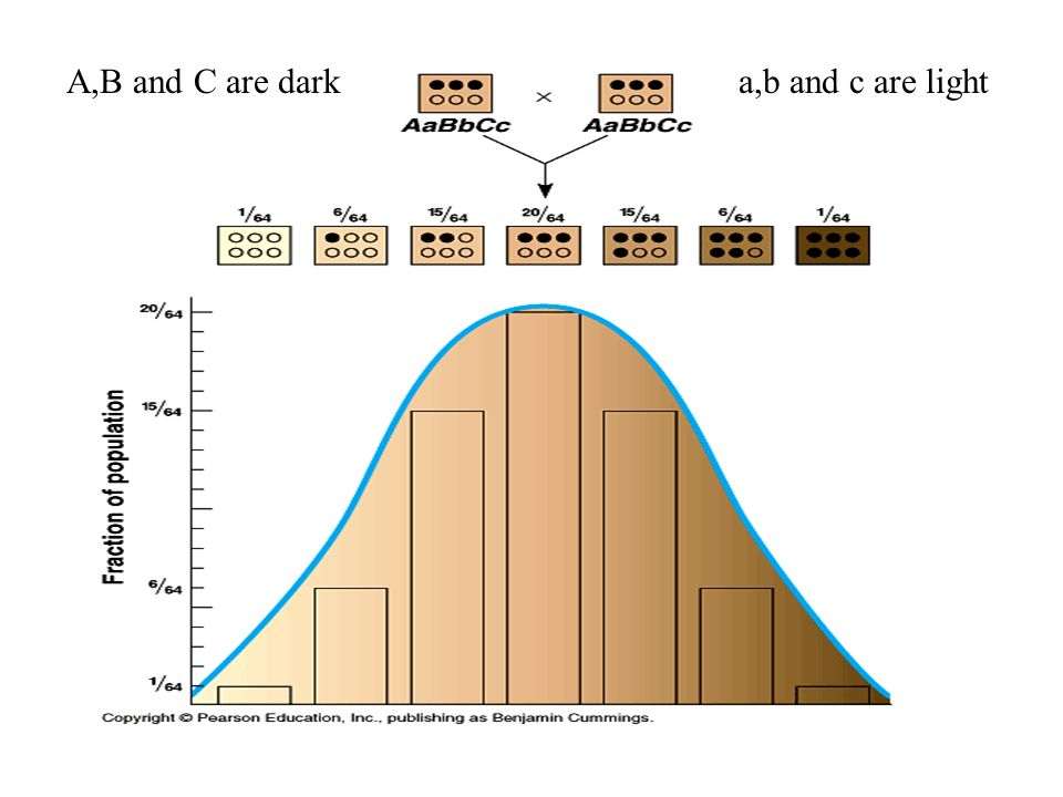 A,B and C are dark a,b and c are light