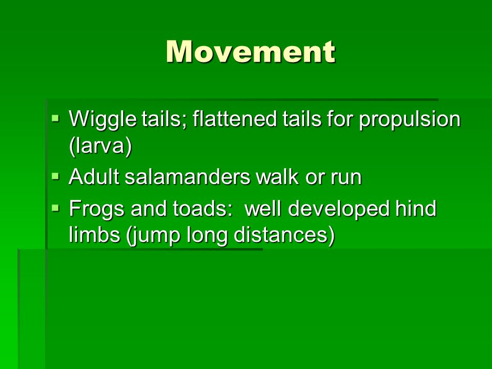Movement Wiggle tails; flattened tails for propulsion (larva)