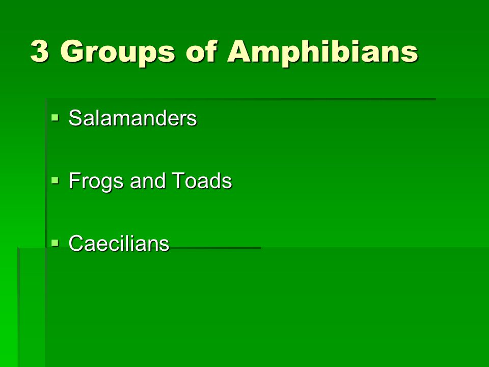 3 Groups of Amphibians Salamanders Frogs and Toads Caecilians