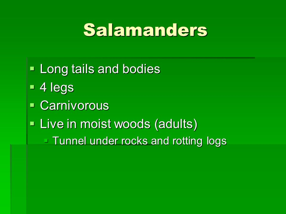 Salamanders Long tails and bodies 4 legs Carnivorous
