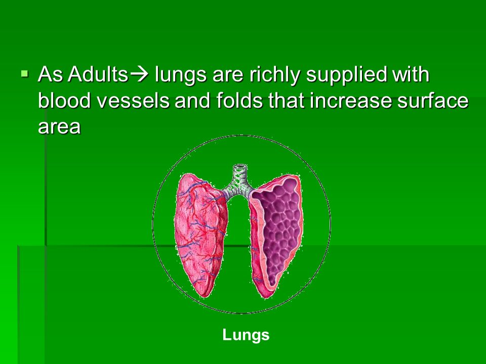 As Adults lungs are richly supplied with blood vessels and folds that increase surface area