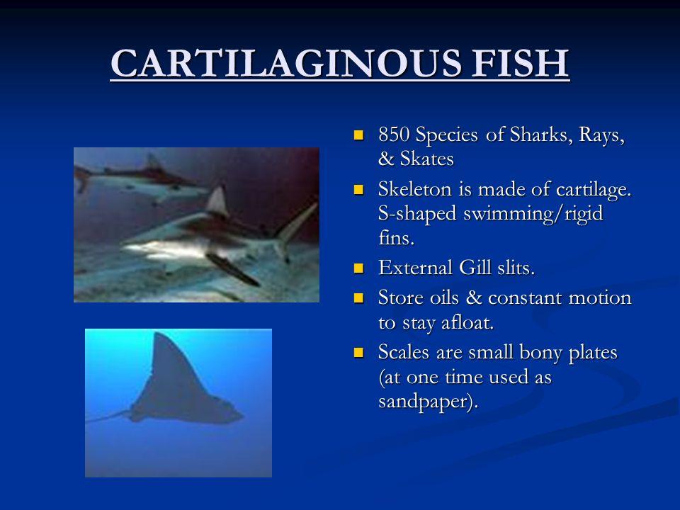 CARTILAGINOUS FISH 850 Species of Sharks, Rays, & Skates