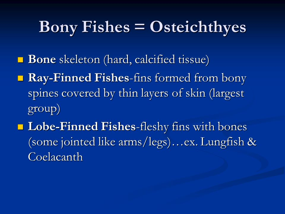 Bony Fishes = Osteichthyes