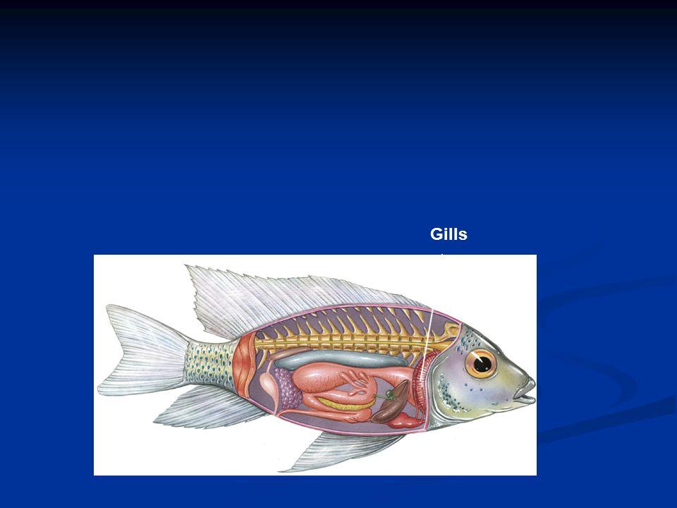 Gills