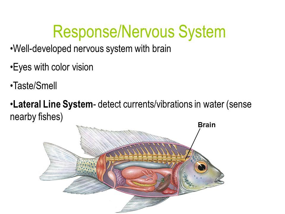 Response/Nervous System