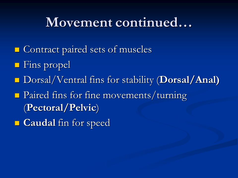 Movement continued… Contract paired sets of muscles Fins propel