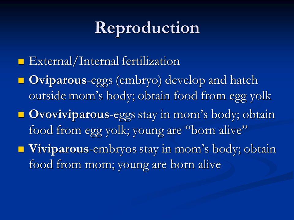 Reproduction External/Internal fertilization