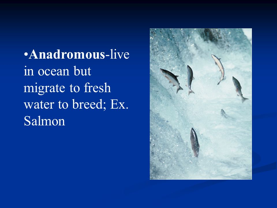 Anadromous-live in ocean but migrate to fresh water to breed; Ex