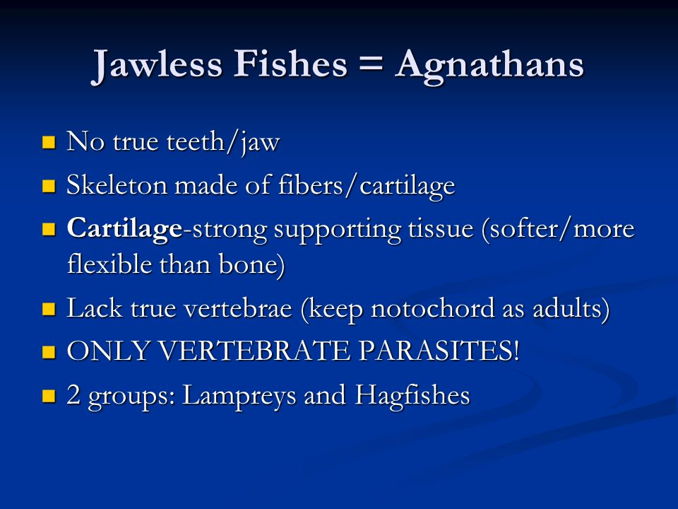 Jawless Fishes = Agnathans