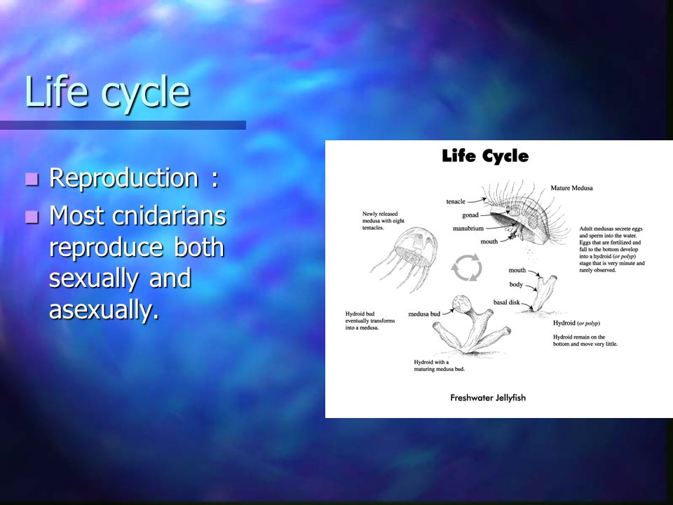 Life cycle Reproduction :