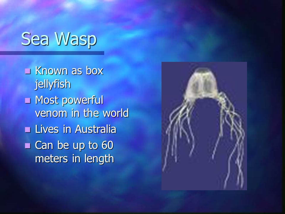 Sea Wasp Known as box jellyfish Most powerful venom in the world