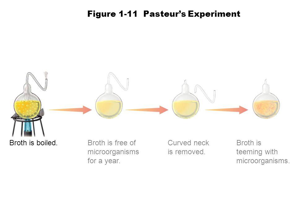 Figure 1-11 Pasteur's Experiment