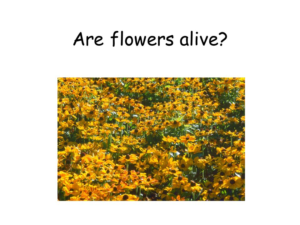 Are flowers alive