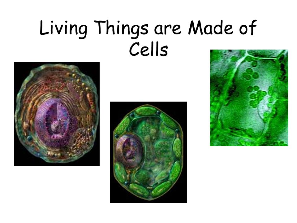 Living Things are Made of Cells