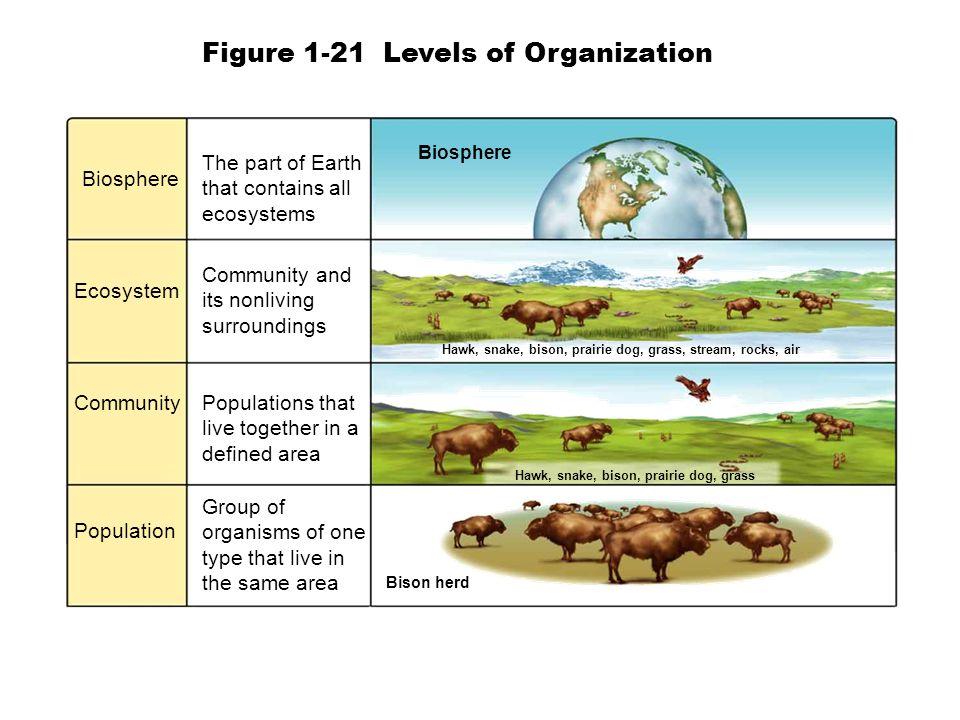 Figure 1-21 Levels of Organization