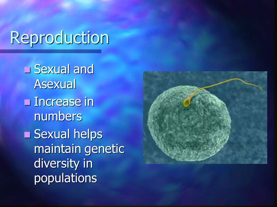 Reproduction Sexual and Asexual Increase in numbers