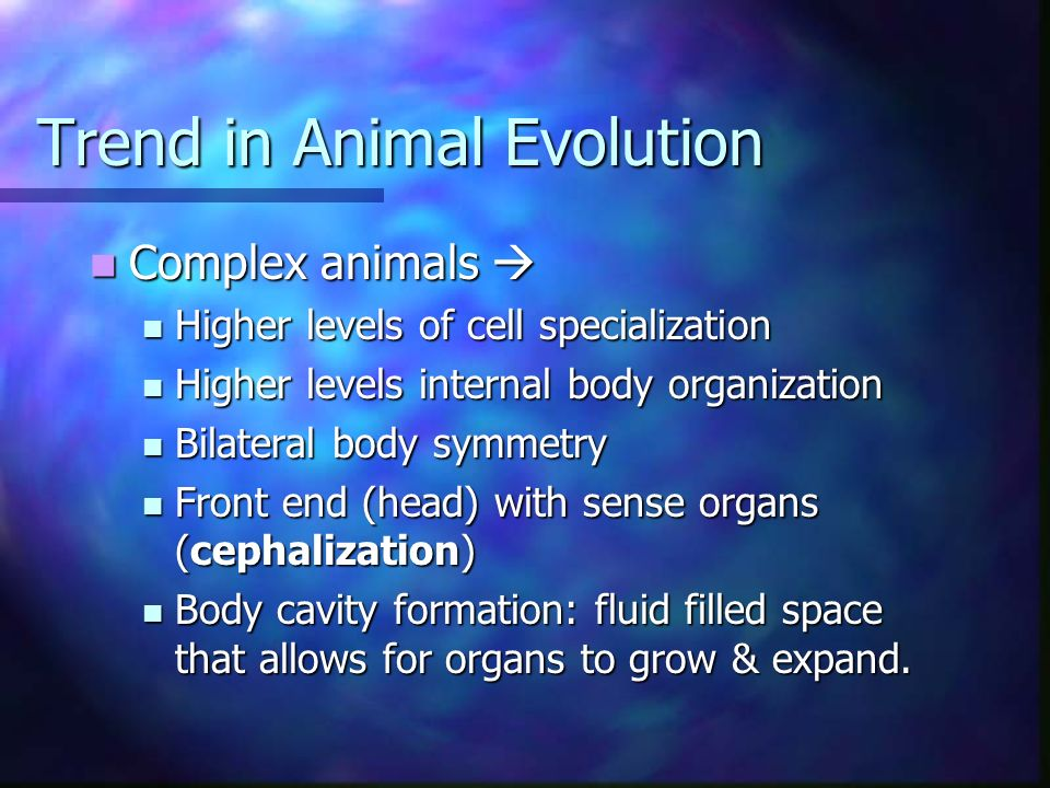 Trend in Animal Evolution