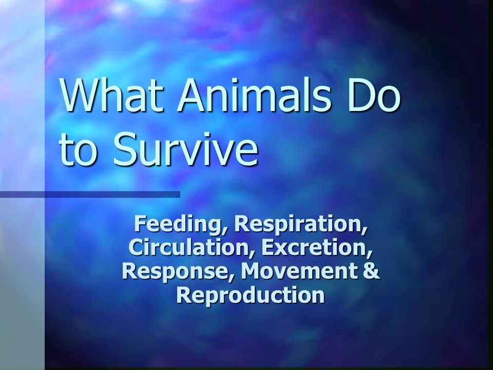 What Animals Do to Survive