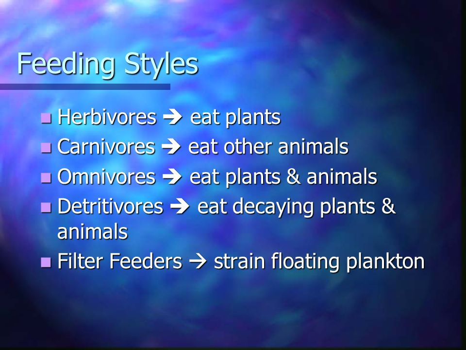 Feeding Styles Herbivores  eat plants Carnivores  eat other animals