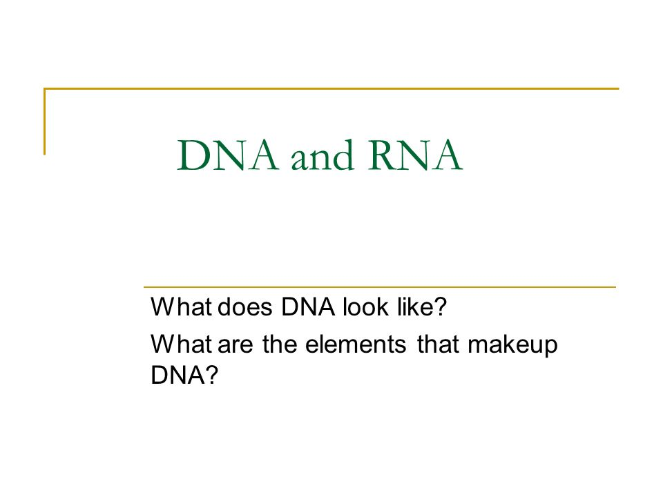 What does DNA look like What are the elements that makeup DNA
