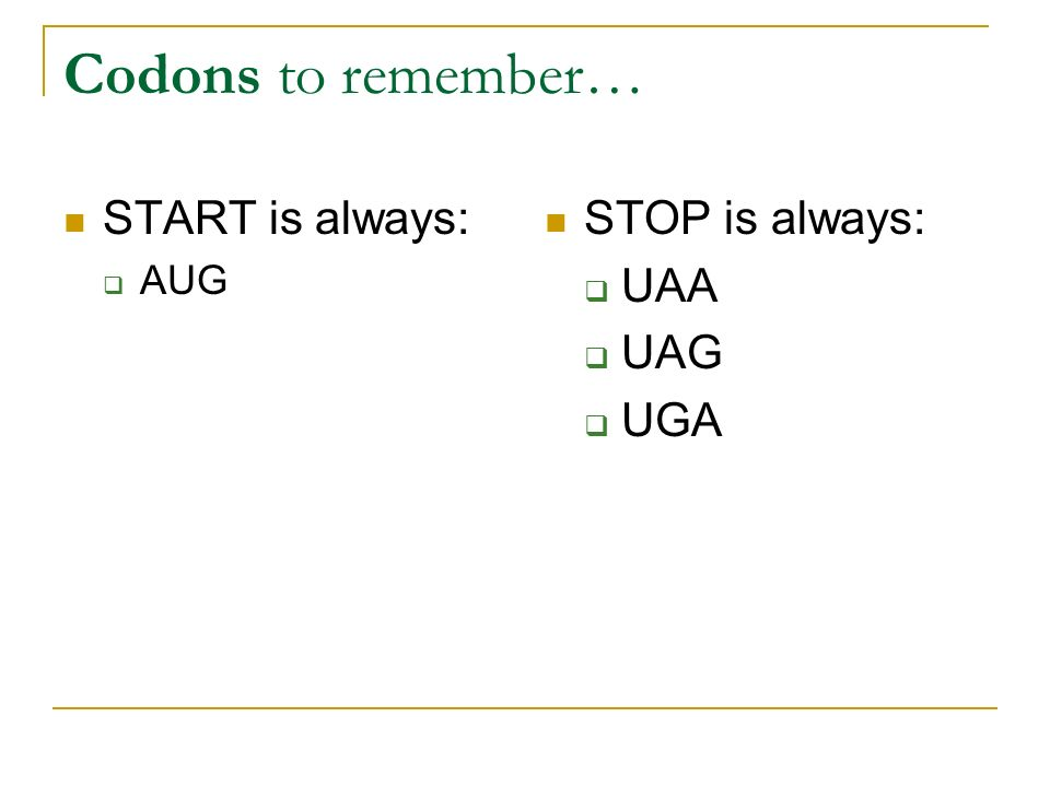Codons to remember… START is always: AUG STOP is always: UAA UAG UGA