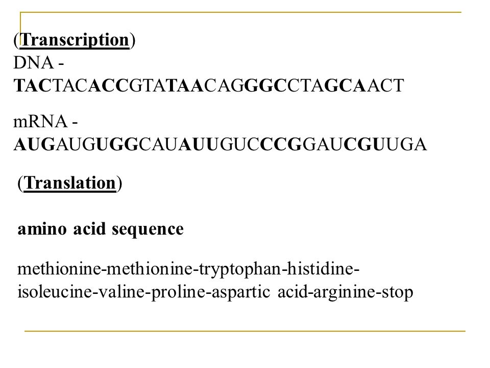 (Transcription) DNA - TACTACACCGTATAACAGGGCCTAGCAACT. mRNA - AUGAUGUGGCAUAUUGUCCCGGAUCGUUGA.