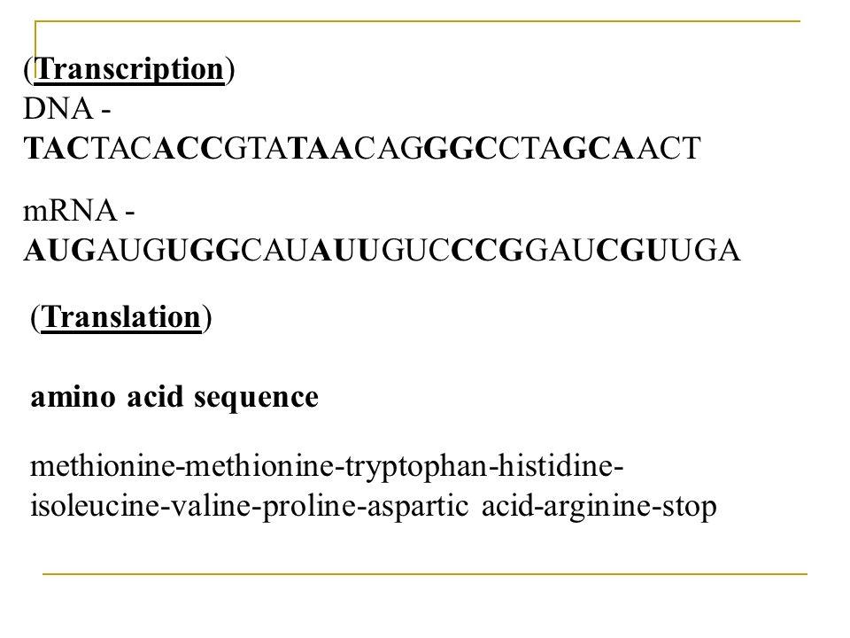 (Transcription)DNA - TACTACACCGTATAACAGGGCCTAGCAACT. mRNA - AUGAUGUGGCAUAUUGUCCCGGAUCGUUGA.