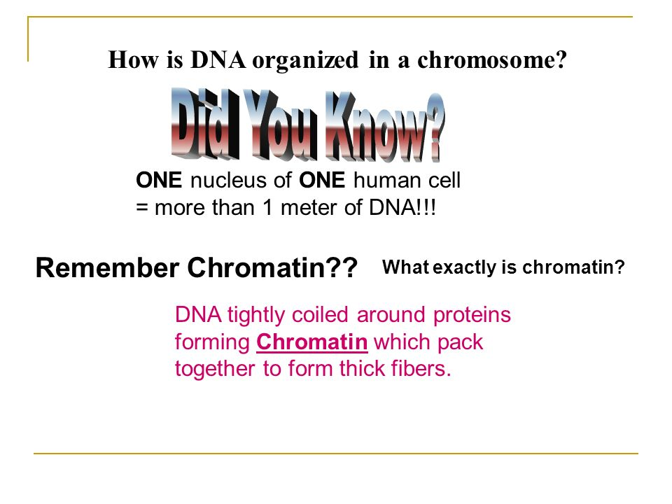 Remember Chromatin How is DNA organized in a chromosome
