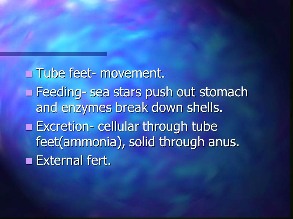 Tube feet- movement. Feeding- sea stars push out stomach and enzymes break down shells.
