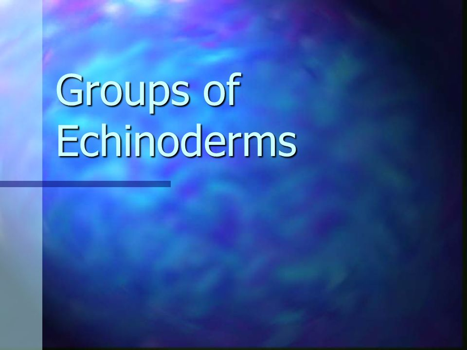 Groups of Echinoderms
