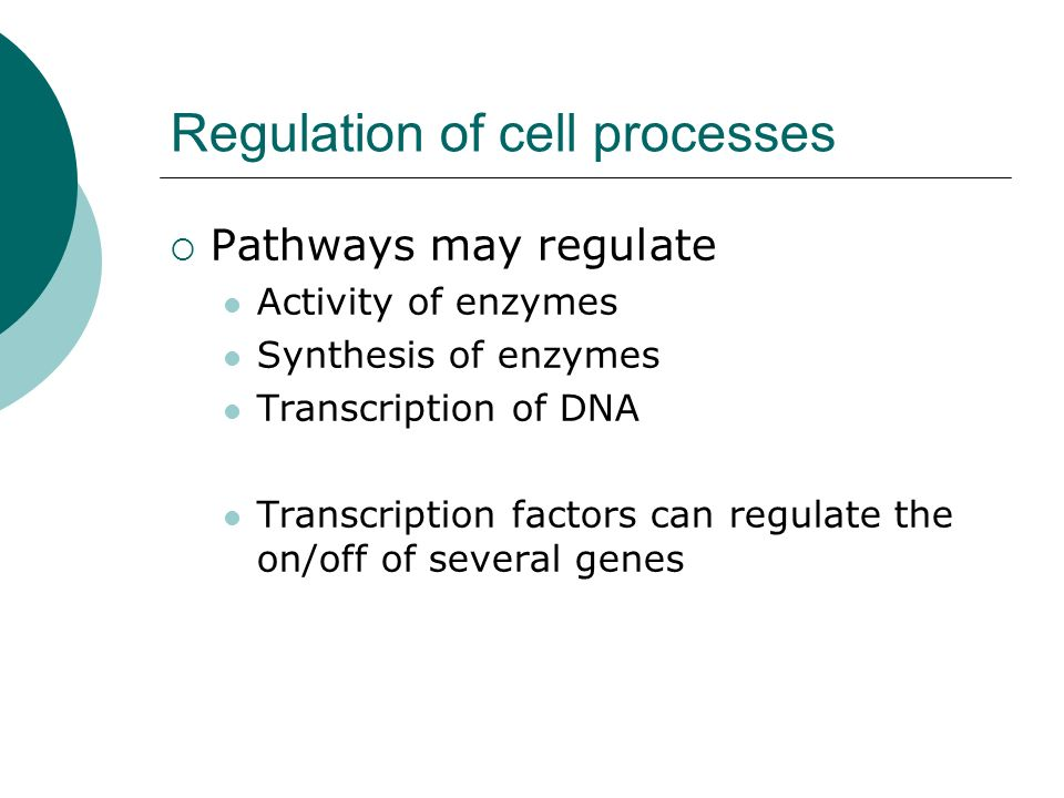 Regulation of cell processes