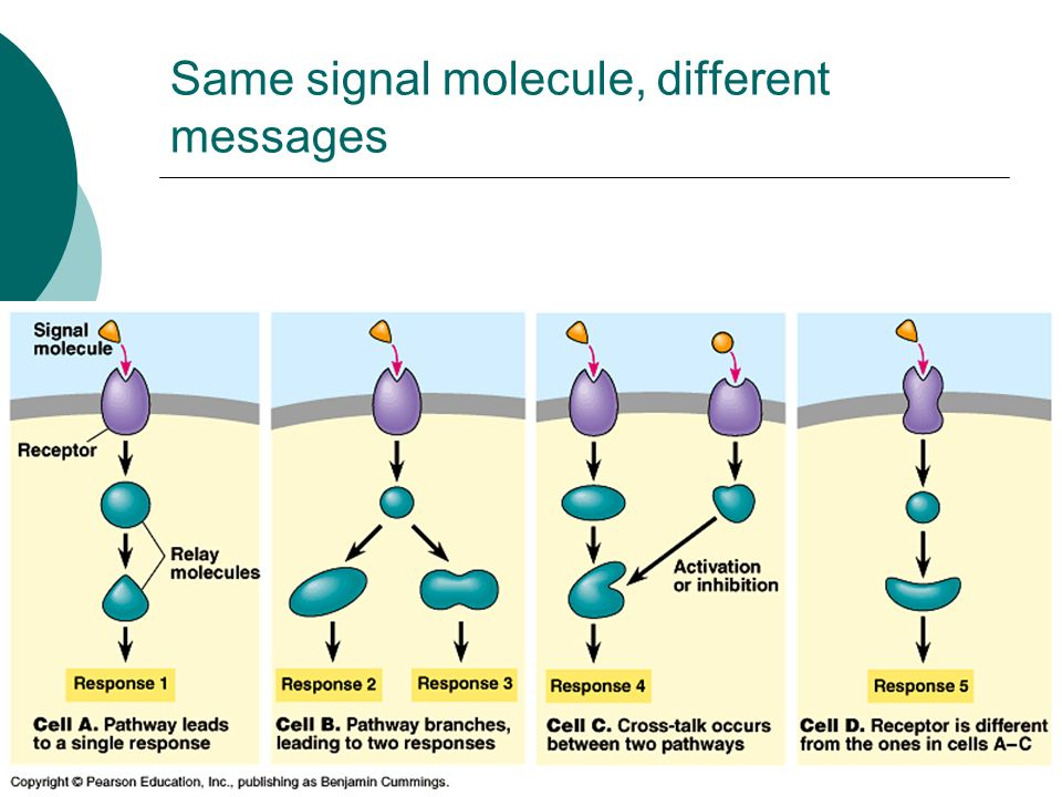 Same signal molecule, different messages