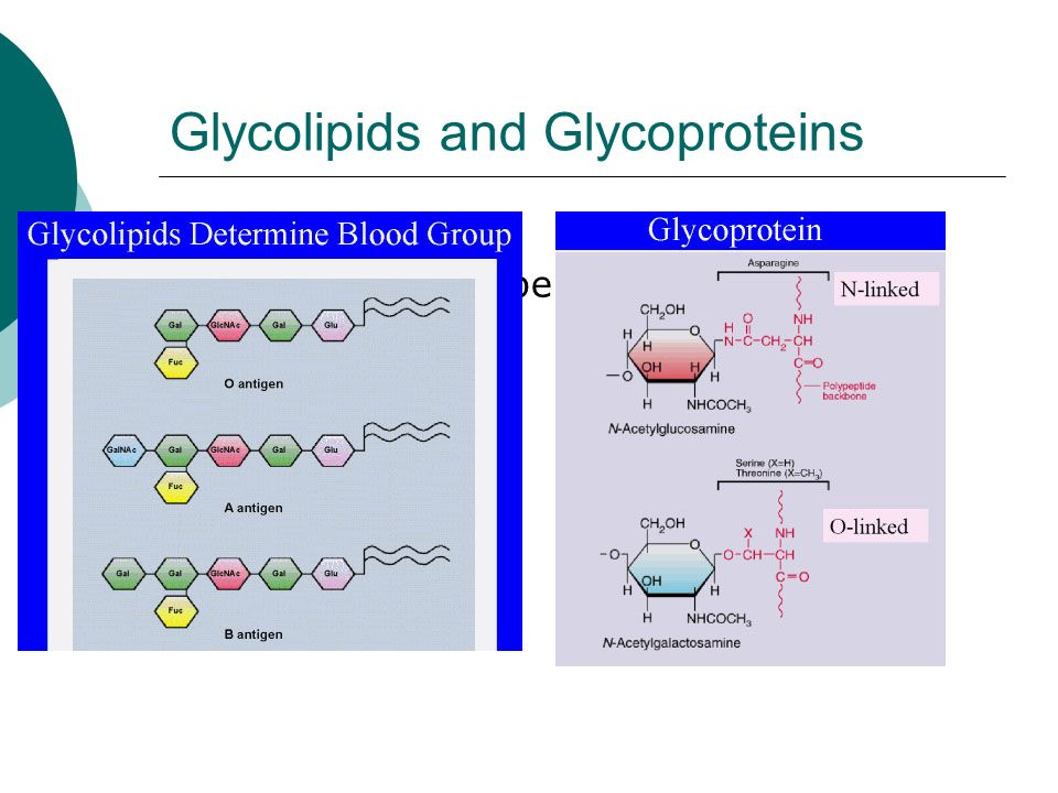 Glycolipids and Glycoproteins