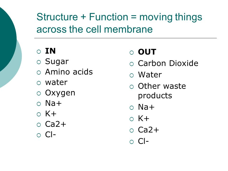 Structure + Function = moving things across the cell membrane