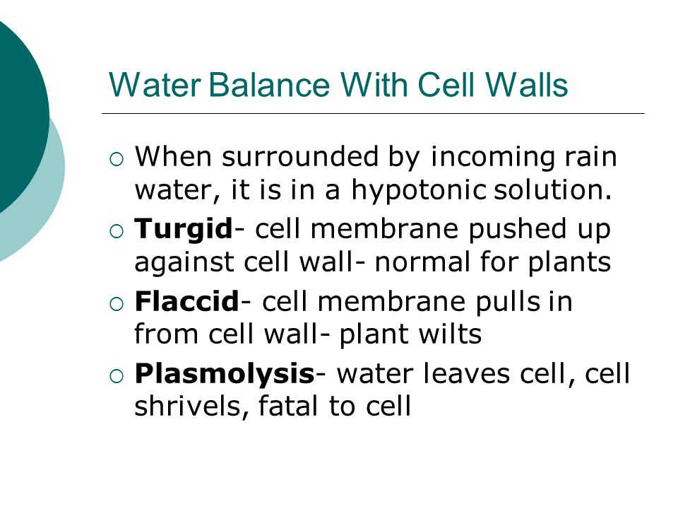 Water Balance With Cell Walls